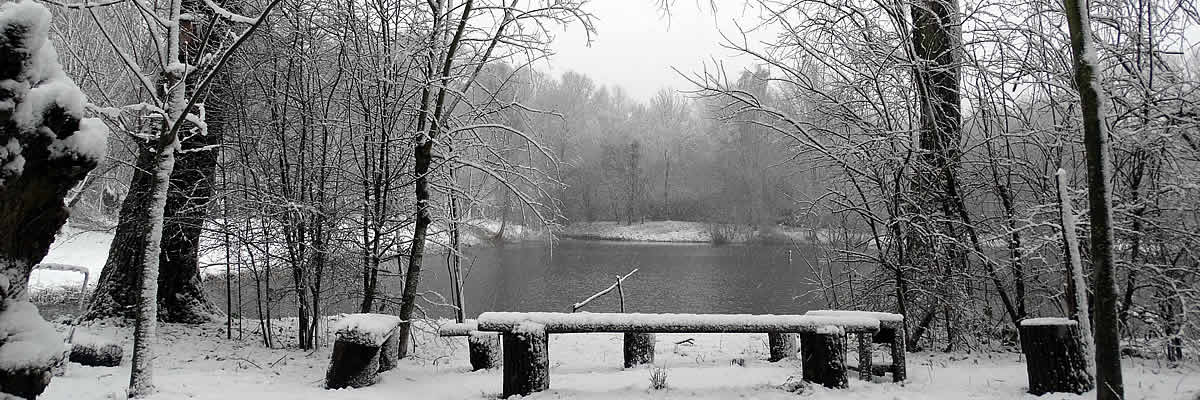 Een winterse blik op de kooiplas